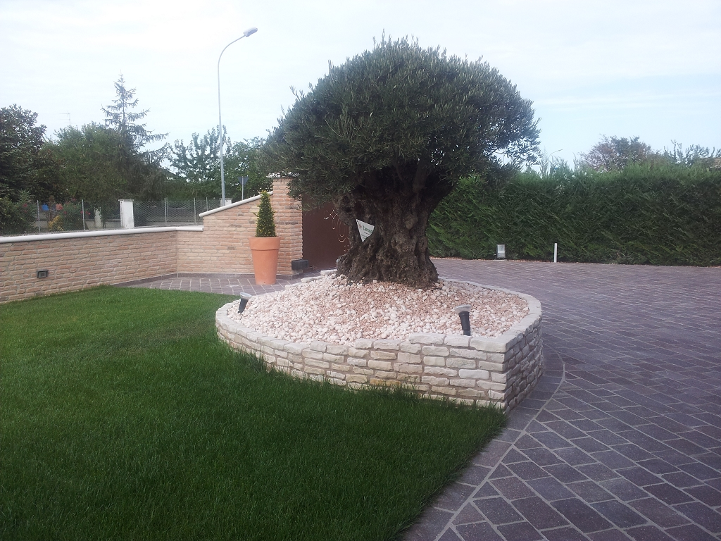 Aiuola per piante esemplari casette tettoie pergole in for Giardini e aiuole