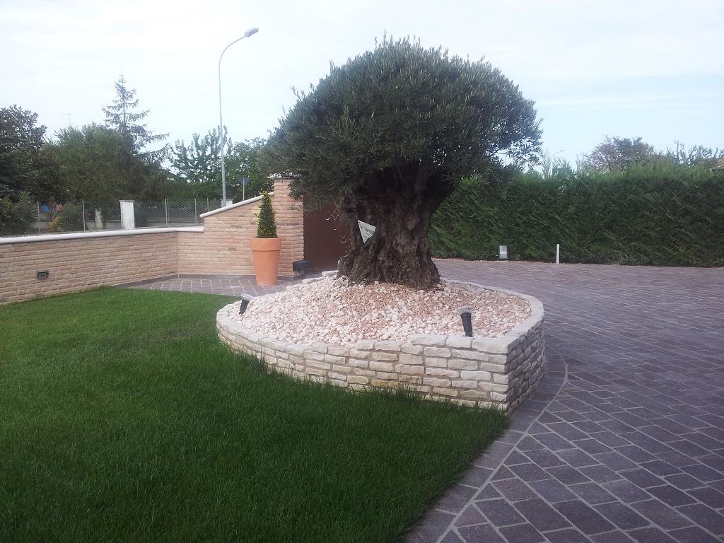 Aiuola per piante esemplari casette tettoie pergole in for Bordure aiuole in tufo