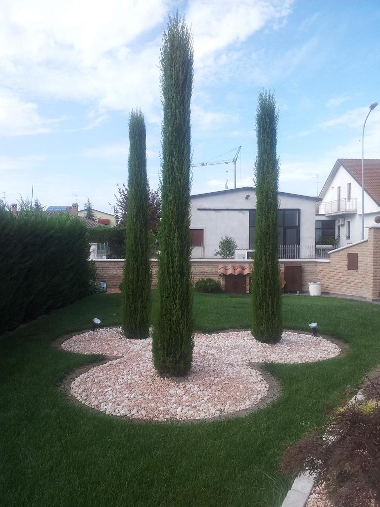 Bordura per piante casette tettoie pergole in legno for Aiuole sempreverdi