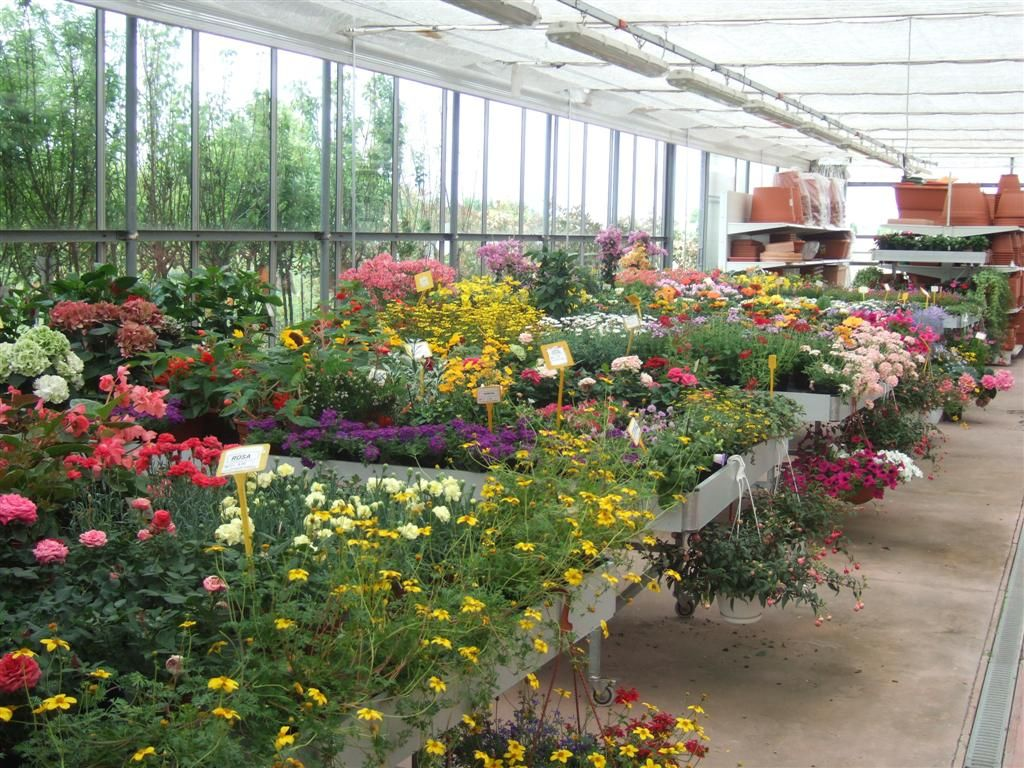 Piante fiorite da esterno casette tettoie pergole in for Piante da giardino perenni fiorite