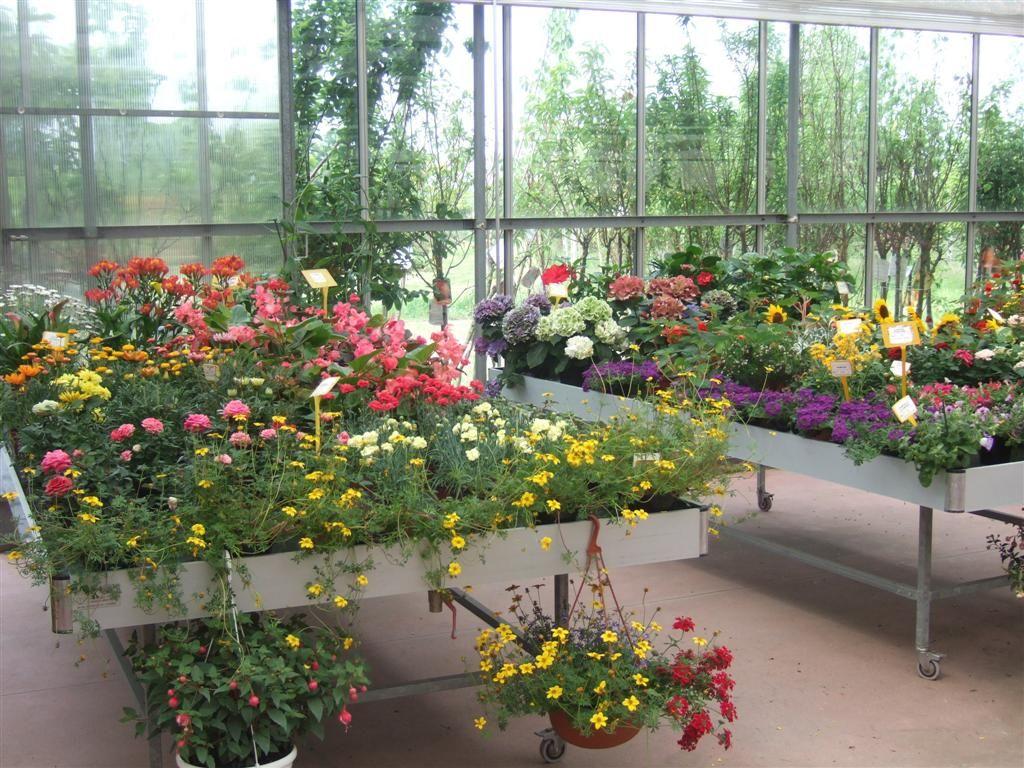 piante fiorite da esterno casette tettoie pergole in