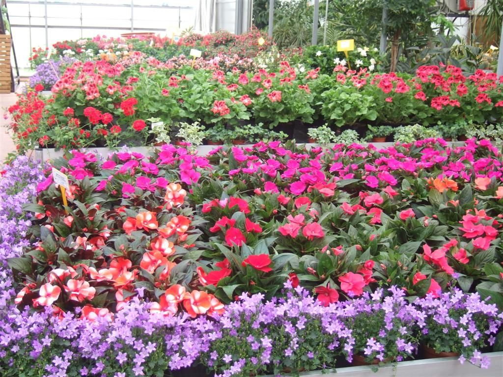 Piante e fiori casette tettoie pergole in legno box auto rovigo realizzazione - Piante vaso da esterno con fiori ...