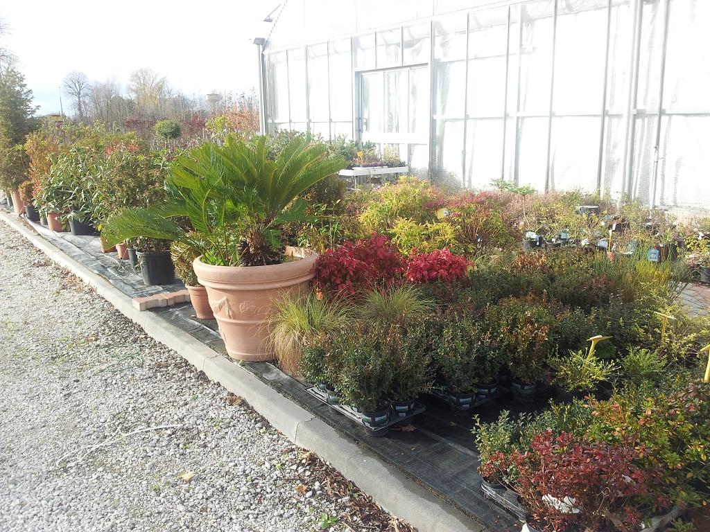 Piante Per Aiuole Perenni piante per aiuole | casette, tettoie, pergole in legno, box